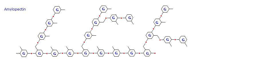 it has a structure similar to amylopectin, but is even more highly branched  (about every tenth glucose unit)  the degree of branching in these