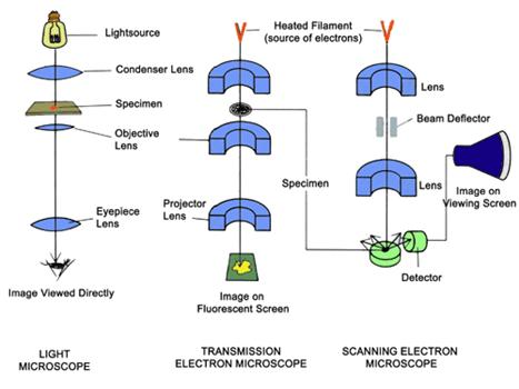 Bridging fluorescence microscopy and electron microscopy